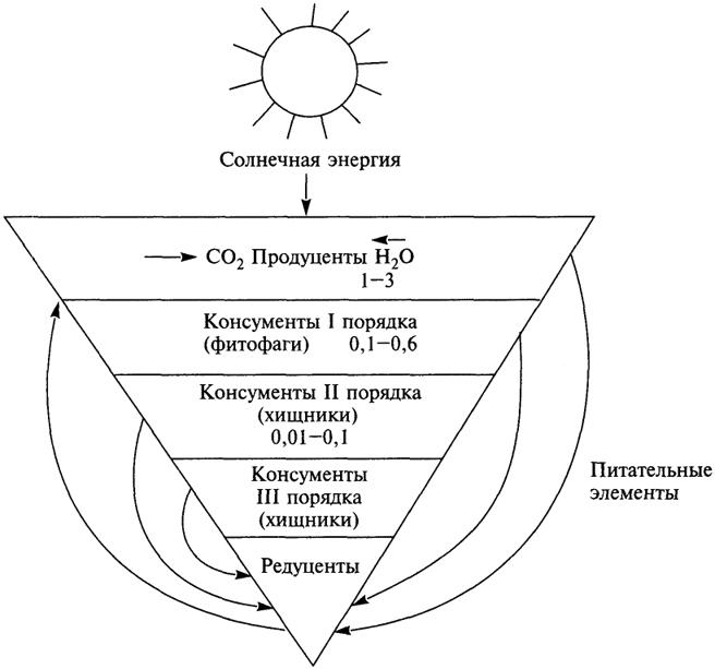 Пирамида биомасс и трофические