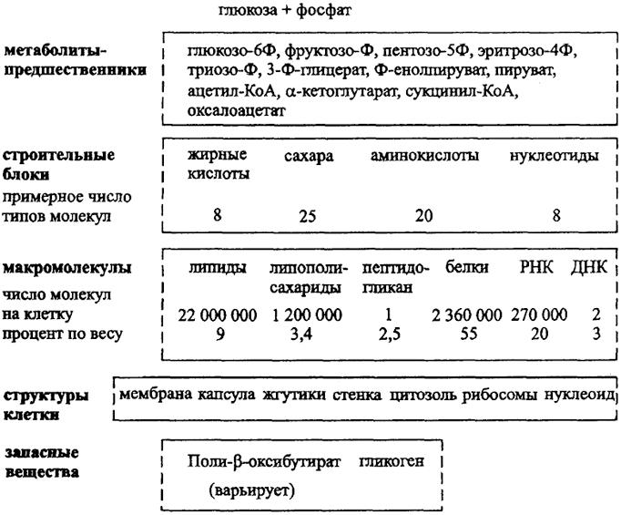 Общая схема анаболизма