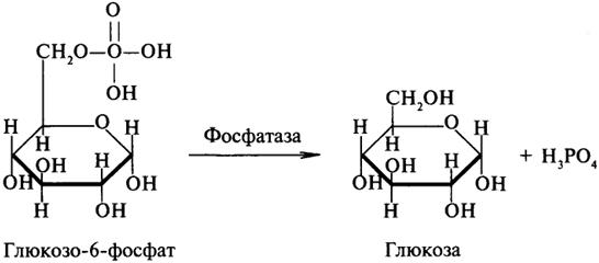 Гликозидазы ускоряют реакции
