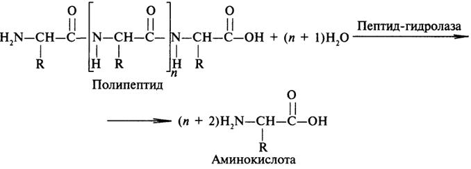 белков и пептидов,