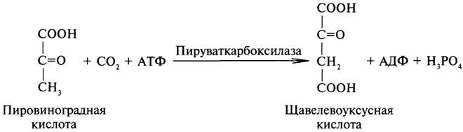 B2319p63-1.jpg