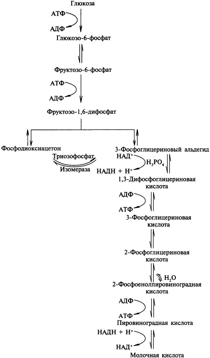 Схема 1. Гликолиз