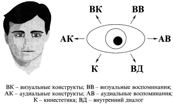 Схема 15. Движения зрачка глаз