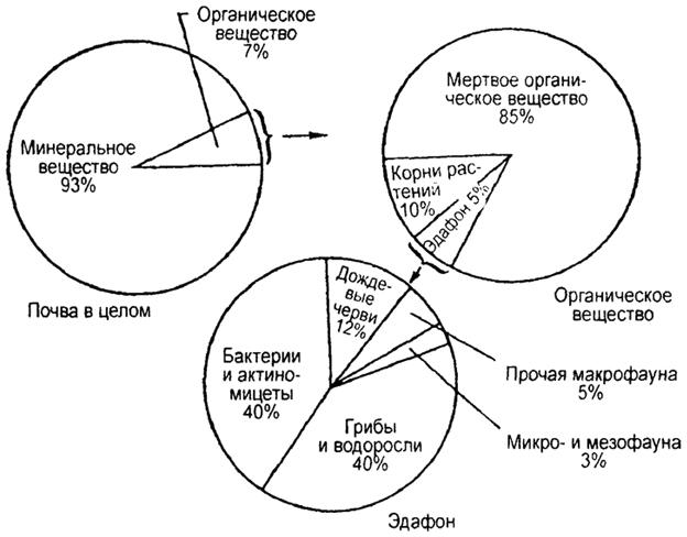 Общий состав верхнего слоя