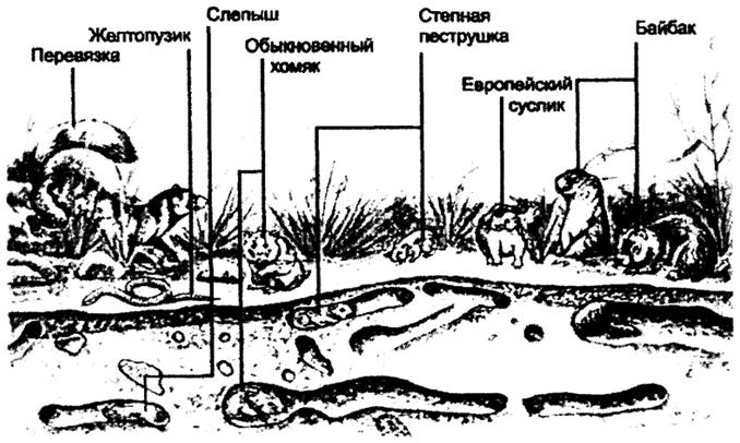 норных животных в степи