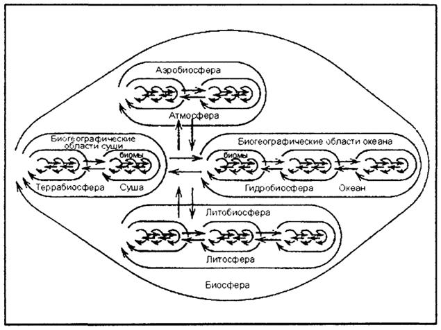схема биологического