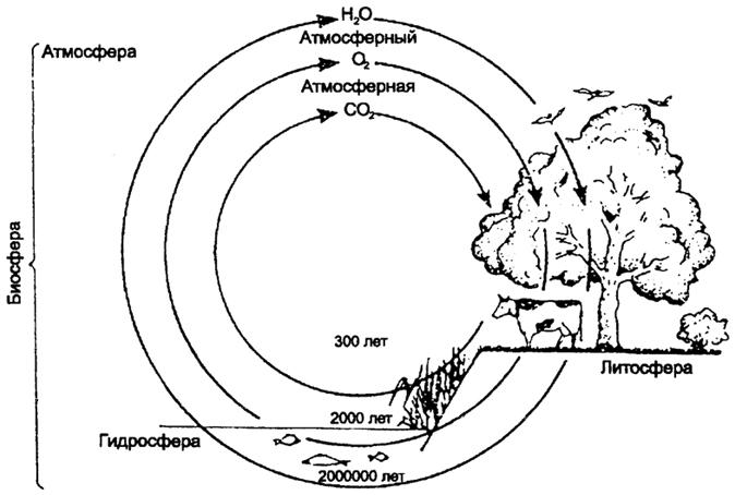 Круговороты воды, кислорода и