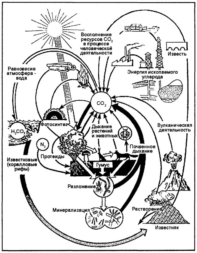 Круговорот углерода (по И.П.