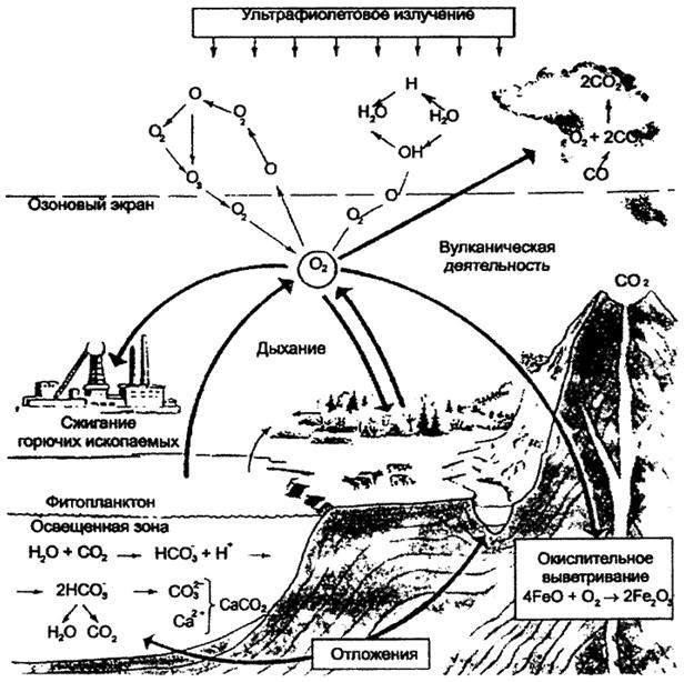 Круговорот кислорода (по Е.А.