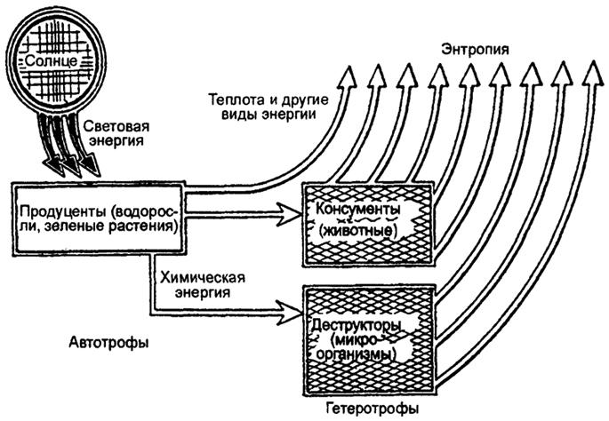 Поток энергии в экосистеме (по