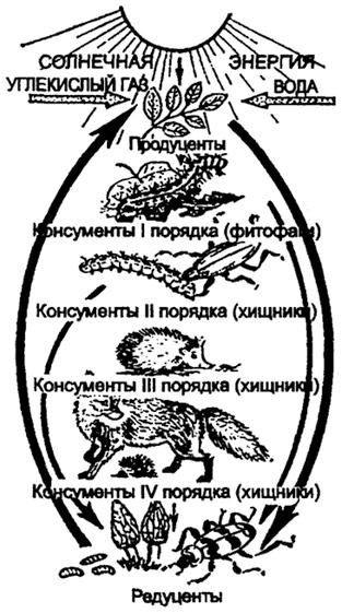 пищевая цепь (по А.Г.