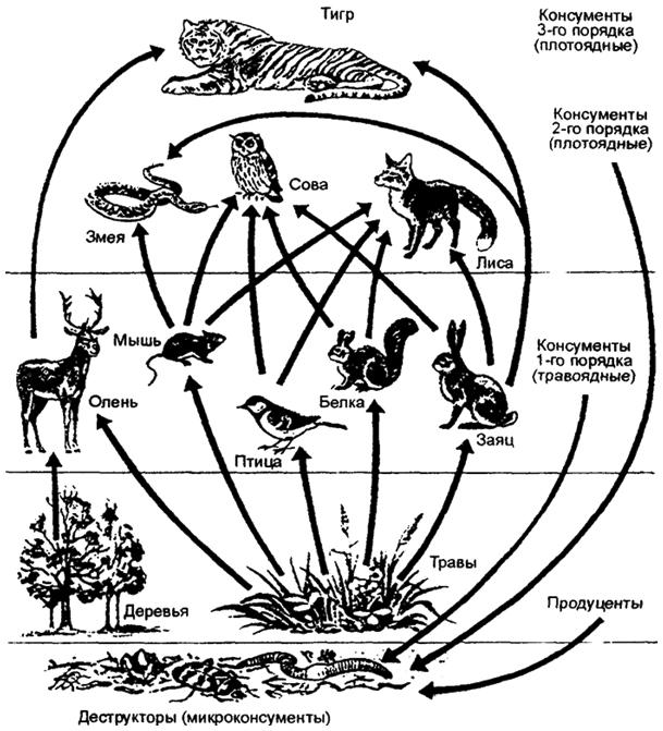 Пищевая сеть и направление