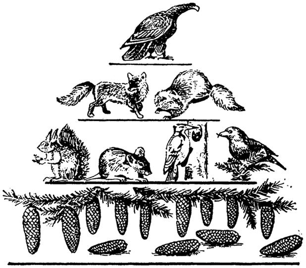 Упрощенная схема пирамиды