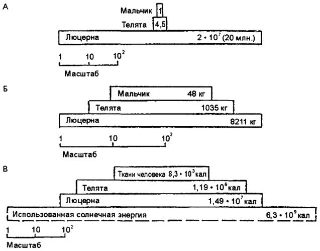 Упрощенная экосистема: люцерна