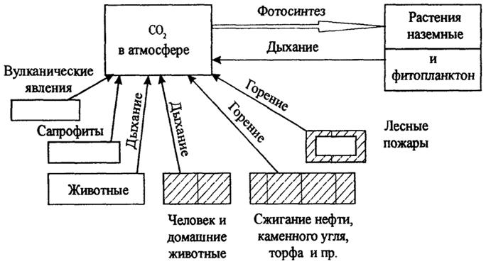 на круговорот углерода