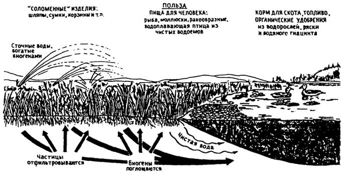 Очистка природных вод схема