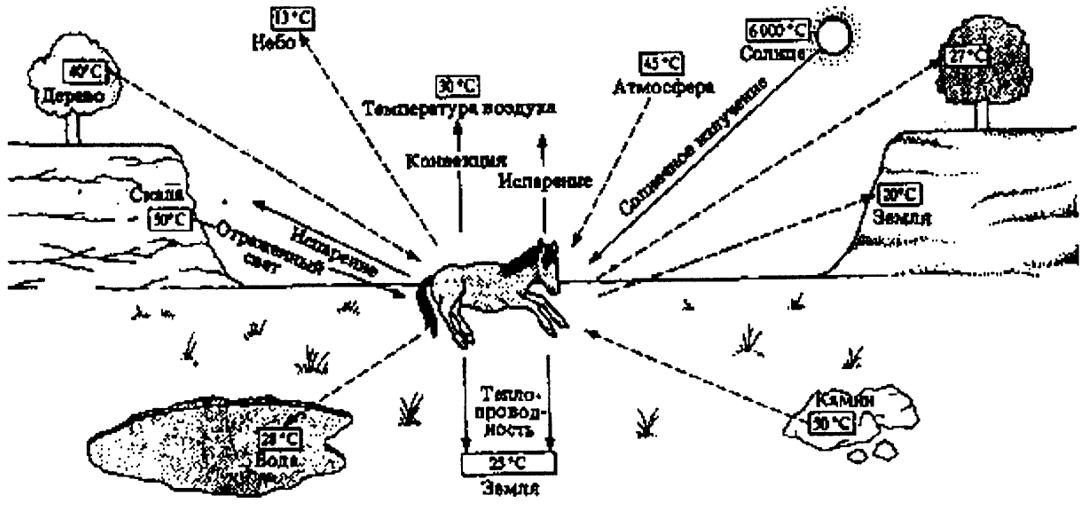 Схема теплообмена между телом